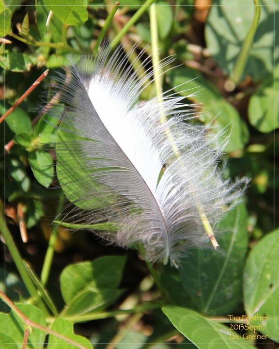 Tao Feather