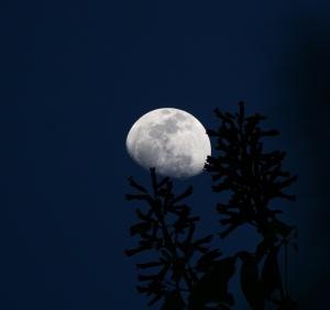 Waxing Gibbous Moon, April 2012